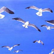 Seagulls Overhead Poster