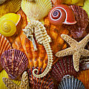 Seahorse And Assorted Sea Shells Poster by Garry Gay