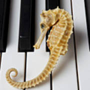 Seahorse On Keys Poster by Garry Gay