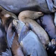 Seal Buddies Poster