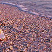 Seashell On The Beach, Lovers Key State Poster