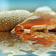Seashell Reflections On Water Poster