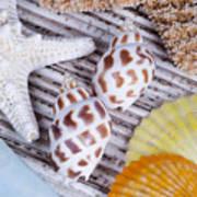 Seashells And Starfish Poster