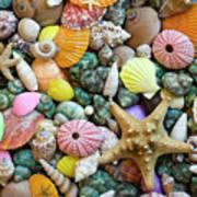 Seashells 3 Poster