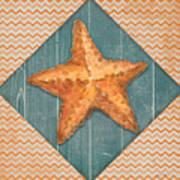 Seashells-jp3621 Poster