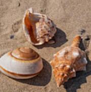 Seashells On The Sand Poster