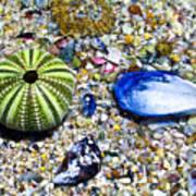 Seashore Colors Poster