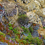 Seaside Cliff Garden In Point Lobos State Reserve Near Monterey-california  Poster