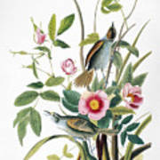Seaside Sparrow, 1858 Poster