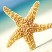 Seastar On Beach Poster