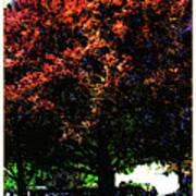 Seattle Chateau Ste Michelle Tree Poster