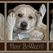 See Boweevil Poster
