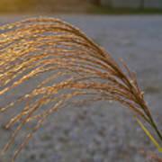 Seeds Of Sunlight Poster