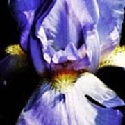 Sensual Iris Poster