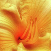 Sensuous Lily Poster