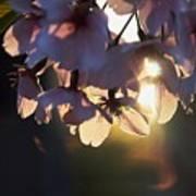 Sentimental Blooming Poster