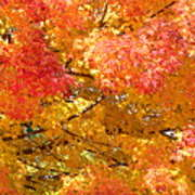 September Leaves Poster