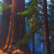 Sequoias On Blue Poster