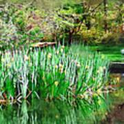 Serene Iris Poster