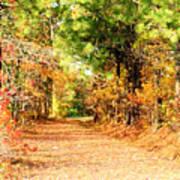 Serene Path Poster