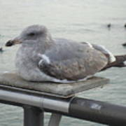 Serene Seagull Poster