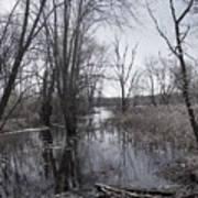 Serene Swampy River Poster