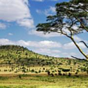 Serengeti Classic Poster