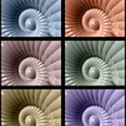 Series Of Sea Shells Poster