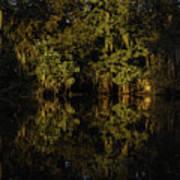 Setting Sun In Maurepas Swamp Poster