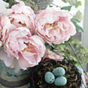Shabby Chic Peonies With Bird Nest Robins Eggs - Summer Garden Peonies Poster