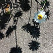 Shadow Daisy Poster