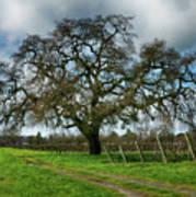 Shadow Of Great Oak Poster