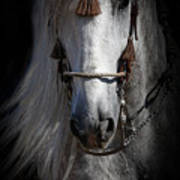 Shadowed Andalusian  Poster