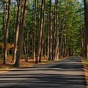 Shadows Road - Ocean County Park Poster
