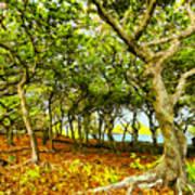 Shady Grove At Wai'anapanapa Poster