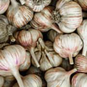 Shantung Garlic Poster