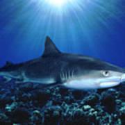 Shark In The Dark Poster
