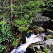 Shays Run Blackwater Falls State Park Poster