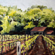 Shed In A Vineyard Poster by Sarah Lynch