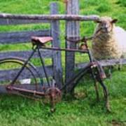 Sheep And Bicycle Poster