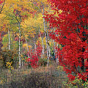 Sheep Canyon In Autumn Poster