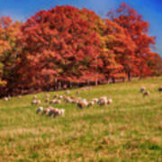 Sheep In The Autumn Meadow Poster