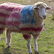 Sheep With American Flag Poster by Garry Gay