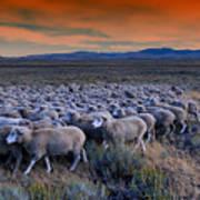 Sheepherder Life Poster