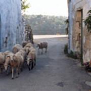 Sheeps Of Crete Poster