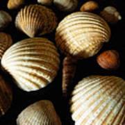 Shell Art - D Poster