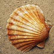 Shell On The Sand Poster