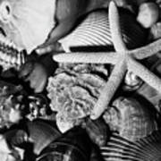 Shells And Starfish In Black And White Poster