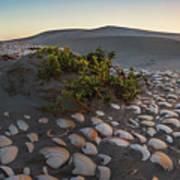 Shells At Desert Poster