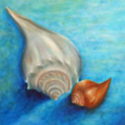 Shells In Blue Poster